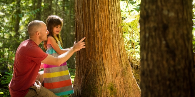 Exploring the trees in Cheakamus Community Forest image by Mike Crane