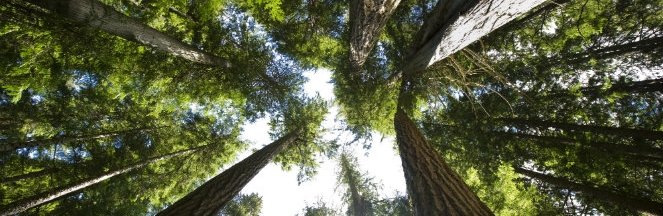 """<p>Whistler community members are invited to the Cheakamus Community Forest open house on <strong>Wednesday, November 25 from 4 to 6:30 p.m</strong>. at the Whistler Public Library (4329 Main Street) in the Community Room.</p> <p>This is an opportunity for the community forest partnership to share 2016 harvesting plans with the public and to collect feedback.</p> <p>In addition, the open house will focus on sharing:</p> <ul> <li><a href=""""http://www2.news.gov.bc.ca/news_releases_2013-2017/2015FLNR0290-001552"""
