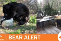 August 2, 2020- Bear destroyed in White Gold