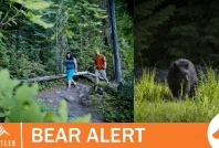 August 6, 2020- Bear destroyed on southeast side of Green Lake
