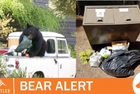 August 10, 2020- Bears accessing attractants throughout Whistler