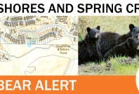 Defensive sow in Bayshores and Spring Creek