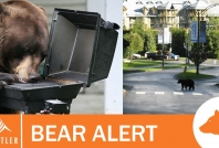 November 9, 2020- Bears in Whistler Village and accessing barbecues throughout Whistler