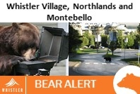 October 7, 2020- Bears in the Village, Northlands and Montebello