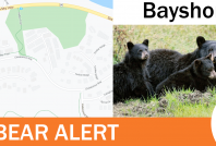Sow and cubs relocated from Bayshores