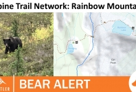 September 28, 2020- Grizzly bear foraging near Hanging Pass on Rainbow Mountain