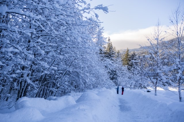 Snowy Valley Trail image by Justa Jeskova, courtesy of Tourism Whistler