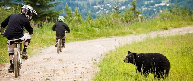 Mountain bikers ride past bear photo by Chad Chomlack
