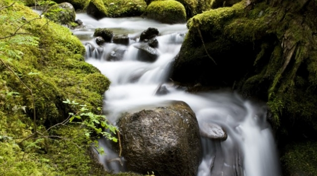 Photo of moss-covered stream in Whistler