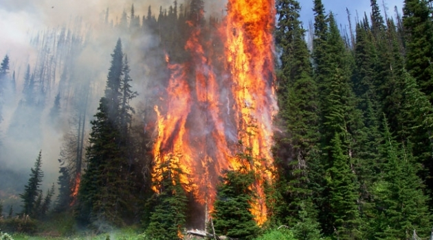 BC Wildfire forest fire image
