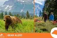 Grizzly Bear Alert- Whistler Alpine Trail Network