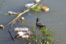 Stream pollution photo by iStock
